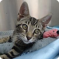Adopt A Pet :: Gordo - Elyria, OH