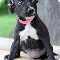 Adopt A Pet :: Katrina - Waldorf, MD