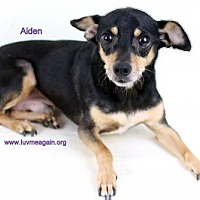 Adopt A Pet :: Aiden - Bloomington, MN