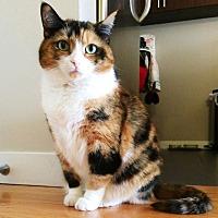 Adopt A Pet :: Naya - New York, NY