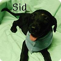 Adopt A Pet :: Sid - Buffalo, NY