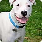 Adopt A Pet :: Ghost