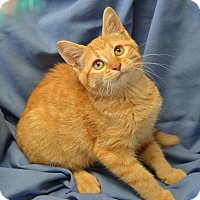 Adopt A Pet :: Peaches - Larned, KS