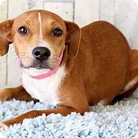 Adopt A Pet :: Cinnamon - Waldorf, MD