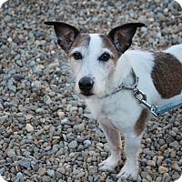 Adopt A Pet :: Einstein - Berea, OH