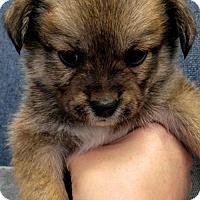 Adopt A Pet :: McSophia - Fresno, CA