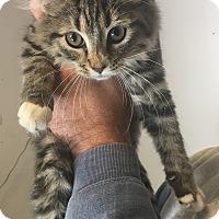 Adopt A Pet :: Diva - Loogootee, IN