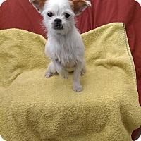 Adopt A Pet :: Tiffany - University Park, IL