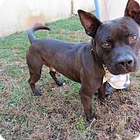 Adopt A Pet :: 16D-1746 (11/21) - Rome, GA