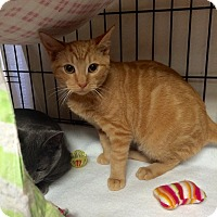 Adopt A Pet :: Butter - Lunenburg, MA