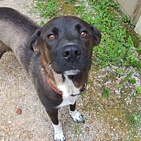 Adopt A Pet :: Leeloo - Somerset, KY