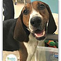Adopt A Pet :: Sammie - Plainfield, IL