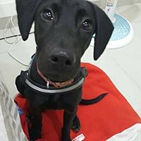 Adopt A Pet :: Heidi - menlo park, CA