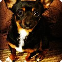 Adopt A Pet :: Homer - Tijeras, NM