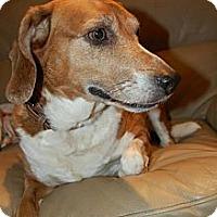 Adopt A Pet :: Lucky - Douglas, ON