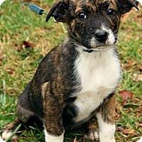 Adopt A Pet :: Kathryn - Staunton, VA