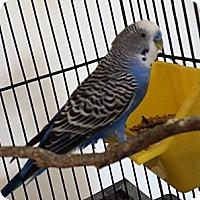 Adopt A Pet :: Fats - Punta Gorda, FL