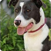 Adopt A Pet :: Butler - Los Angeles, CA