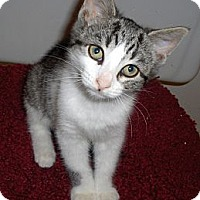 Adopt A Pet :: Colby - Richmond, VA