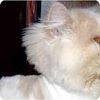 Adopt A Pet :: VIKKI - Jacksonville, FL