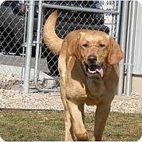 Adopt A Pet :: Eclipse - Meridian, ID