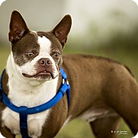 Adopt A Pet :: BRUNO - Weatherford, TX