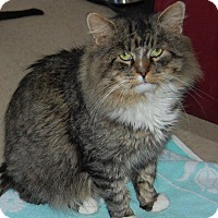 Adopt A Pet :: Mr. Kitty - Brainardsville, NY