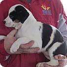 Adopt A Pet :: Estella