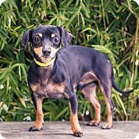 Adopt A Pet :: Donny - Berkeley, CA
