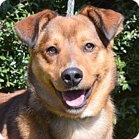 Adopt A Pet :: **BUCK** MEET FEB 13TH! - Mukwonago, WI