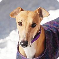 Adopt A Pet :: Melody - Ware, MA