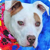 Adopt A Pet :: VEDA - Louisville, KY