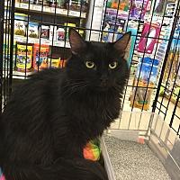 Adopt A Pet :: Cadence - Gilbert, AZ