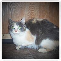 Adopt A Pet :: HANNAH - Medford, WI
