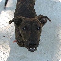 Adopt A Pet :: Barkley - Groton, MA