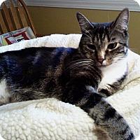 Adopt A Pet :: Colby - N. Billerica, MA