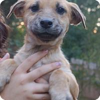 Adopt A Pet :: Monty - Bayshore, NY