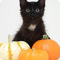 Adopt A Pet :: Charly - Dublin, CA