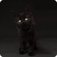 Adopt A Pet :: Sombre - Dublin, CA