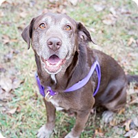 Adopt A Pet :: Emma - Kingwood, TX