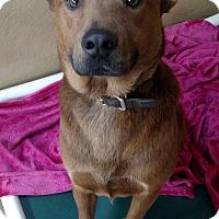 Adopt A Pet :: Bear Paw - Divide, CO