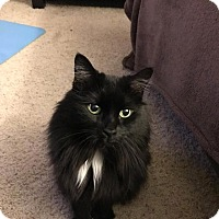 Adopt A Pet :: Hope - Shoreline, WA