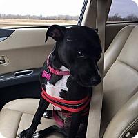 Adopt A Pet :: Daphne - Wichita, KS