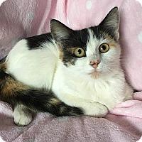 Adopt A Pet :: Apple - Tampa, FL