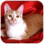 Photo 3 - Domestic Shorthair Cat for adoption in Nashville, Tennessee - Bunny