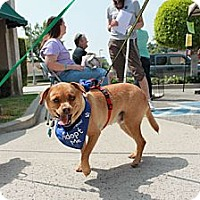 Adopt A Pet :: Trixie - Monrovia, CA