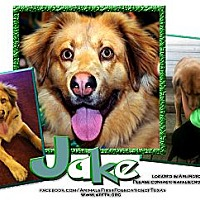 Adopt A Pet :: JAKE - Irving, TX