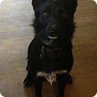 Adopt A Pet :: Vivi - Hop Bottom, PA