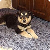 Adopt A Pet :: Rascal - Phoenix, AZ
