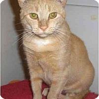 Adopt A Pet :: Molly - Richmond, VA